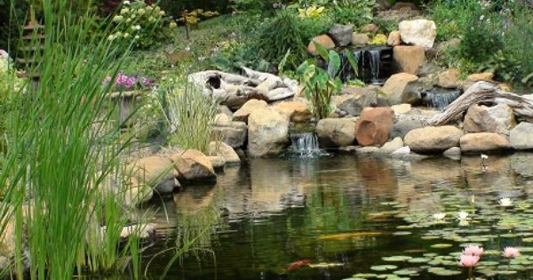 Pond Lake Water Garden Supplies Pond Algae Control