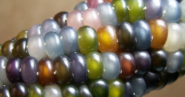 More beautiful glass gem corn. Why are there so many vibrant colors