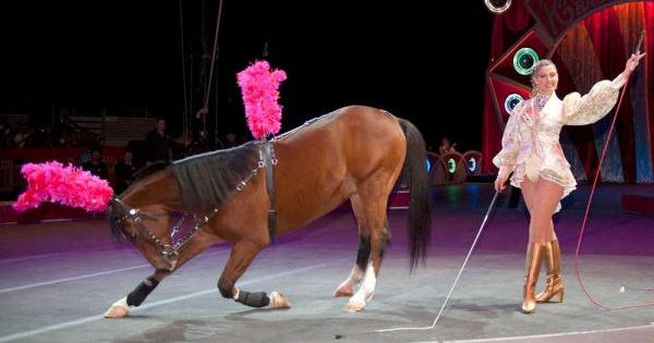 Taking a bow | Circus Horses and Trick Riding | Pinterest ...