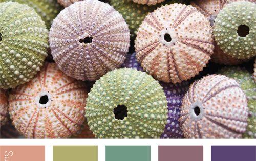 Gamme de couleurs suzie pinson f e de la couleur - Gamme chromatique couleur ...