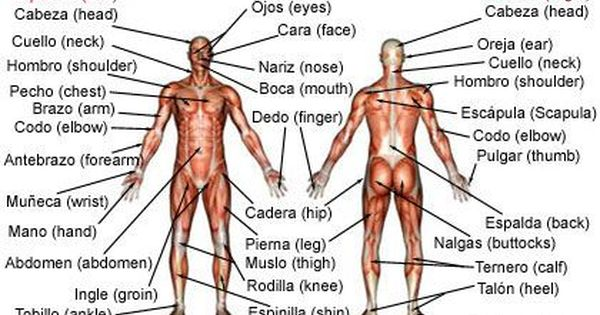 Medical Spanish Tips For Physical Therapists Physical Therapy Teaching Spanish Medical Terminology How To Speak Spanish