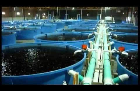 Aquaculture system promises eco friendly fish farming for Garden pool doomsday preppers
