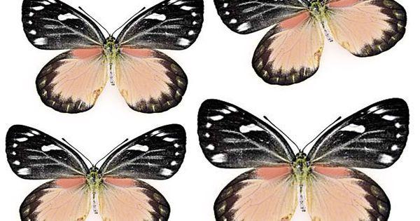 martha stewart butterfly template - 1341000490 55 ft838 swirlydoos july 2012 butterflies black
