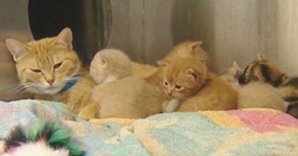 Viburnum A1082109 Cat Adoption Cat Shelter Foster Cat