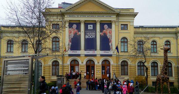 Grigore Antipa Museum Of Natural History Bucharest Bucharest Natural History History