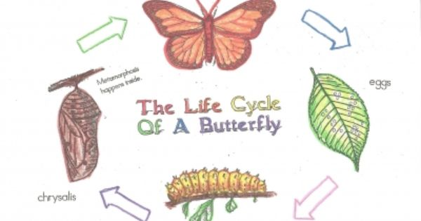 Butterfly Life Cycle Poster Charts Butterfly Life Cycle Posters Butterfly Life Cycle Life Cycles