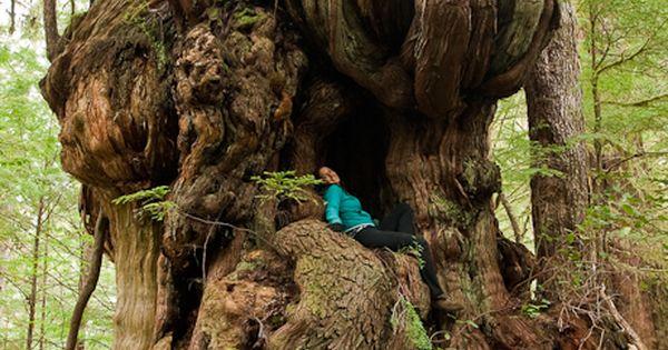 Gnarly tree.