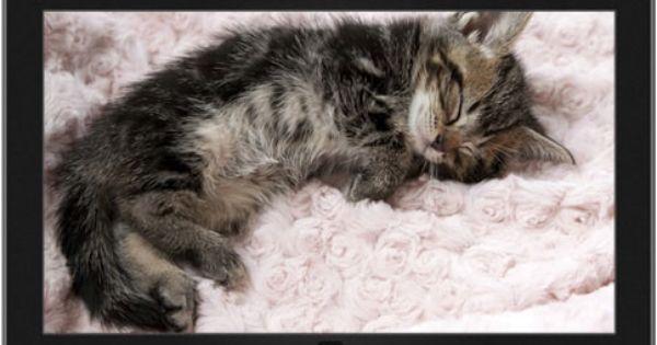 Chaton Endormi Sur Un Couvre Lit Kittens Cutest Sleepy Kitten Kitten Wallpaper