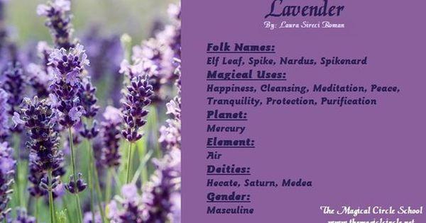 Magical Properties Of Lavender Herbal Magic Magic Herbs Magickal Herbs