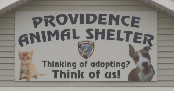 By Holly Huntoon Nbc 10 News Providence Animal Control Center Is Looking For A Male Who Abandoned A Cat On Chalkstone Ave W Animal Control Cats Nbc 10