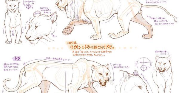 how to draw a mountain lion videos