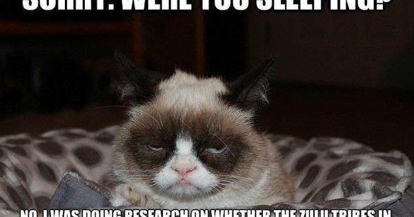 Funny Memes In Zulu : Grumpy cat meme disturbed from its sleep