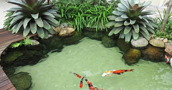 Foto da empresa ecosys gardening jardinagem for Artificial koi fish