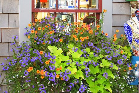 WINDOW BOX :: Calibrachoa (orange), Beautiful Flower Box - sutera cordata (white),