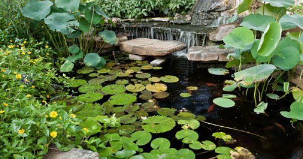 Tips tricks ideas for backyard pond design garden for Garden pond advice