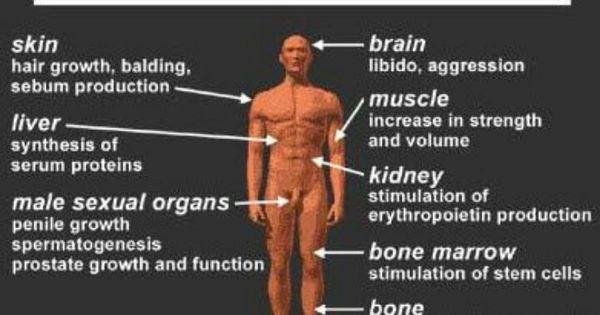 testosterone symptoms