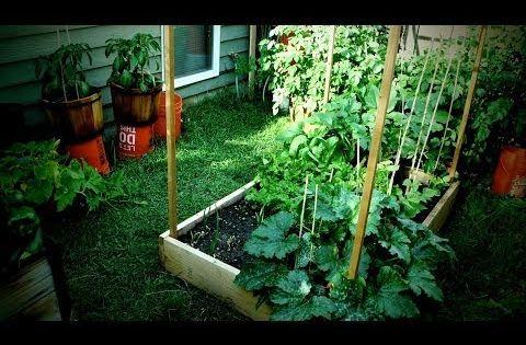 Jardin potager bio petite surface food sovereignty for Organiser un petit jardin