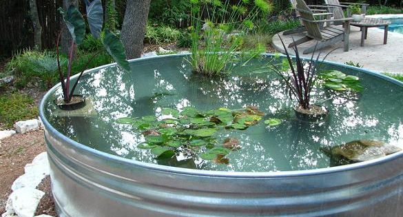 Over The Years Of Blogging About My Stock Tank Ponds A 100 Gallon Container Pond In My Former Ga Container Pond Diy Water Feature Water Features In The Garden