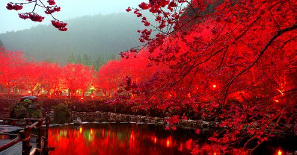 Inspiring picture autumn, awsome, beautiful, blossoms, bridge.