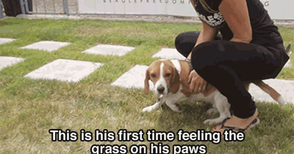 Beagles Rescued From Lab Testing See Sunshine For The First Time