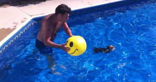 Yorkie swimming then attacking ball and falling into pool - Swimming pools in south yorkshire ...