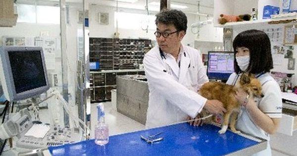 動物看護師 は飼い主との懸け橋 思いや言葉をつなぐ 動物看護師 動物 看護師