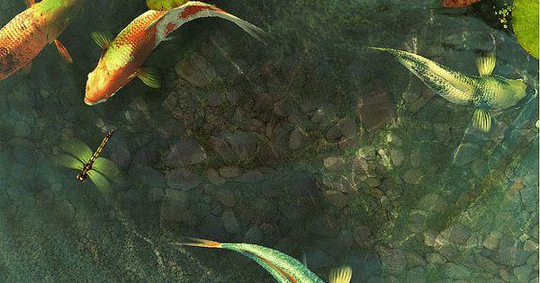 Gambar Ikan Koi Animasi Bergerak Lucu Fish Wallpaper Hd Image Gif Gif Image 640 480 Pixels