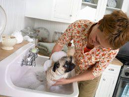 How To Care For A Pug Baby Pug Dog Pets Pugs