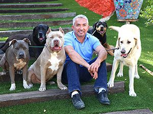 Why Socialization Is Important Socializing Dogs Cesar Millan