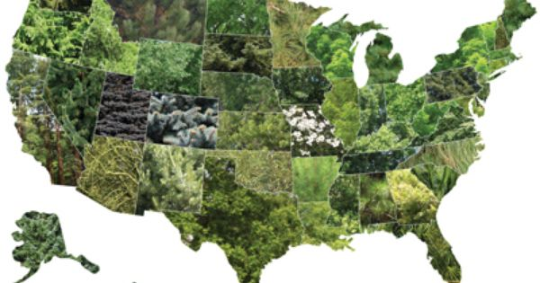 USA State Tree Map Personal Branding - Us map collage