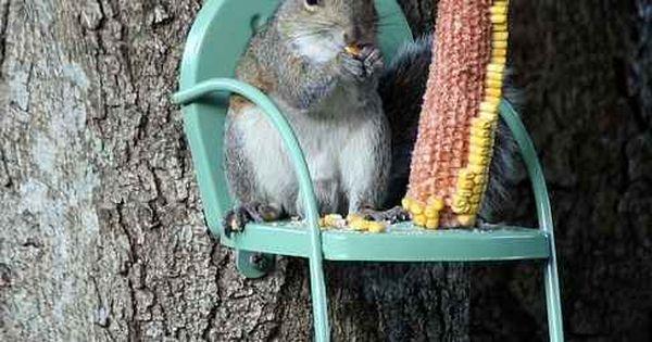 squirrel chair!!! Haha fun funny animal photo