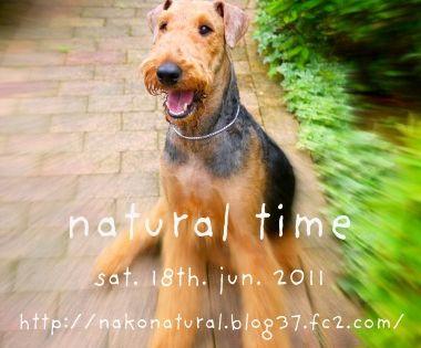 P1080995 Jpg Nature Dogs Terrier