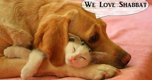 We Love Shabbat Dogs Hugging Dog Friends Animals Friendship