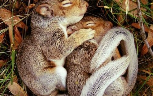 Sleeping Baby Squirrels animals babysquirrels