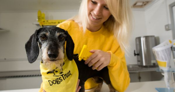 Dogs Trust Ireland S Largest Dog Welfare Charity Has Hailed The Government S Commitment To Introduce Compulsory Microchipping For Al Dogs Trust Dogs Your Dog