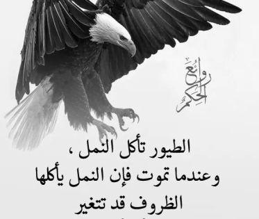 حكم بالانجليزي عن الغربه صور حكم وأمثال عن الحياة أكتب اسمك على الصور Bald Eagle Arabic Words Poster
