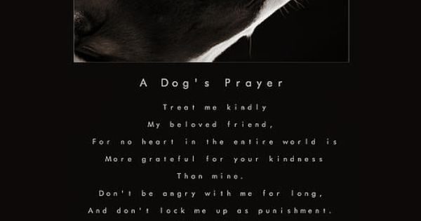a dog u0026 39 s prayer  treat me kindly  my beloved friend  for no heart in the entire world is more
