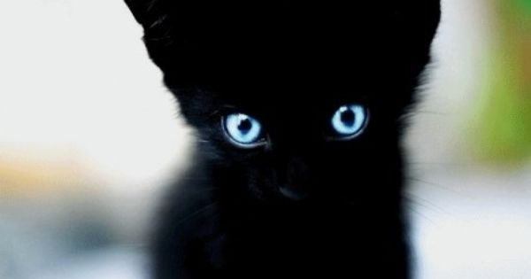 Black kitten with blue eyes