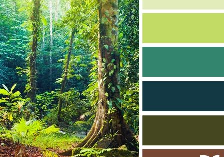 Quot Color Forest Quot From Design Seeds Com I Just Love The
