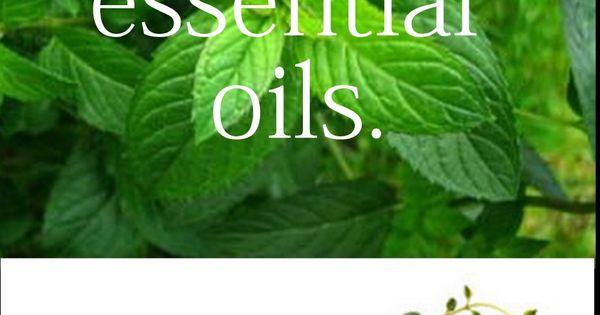 5 Essential Oils to Makeover your Medicine Cabinet: Lavender, Lemon, Peppermint, Tea