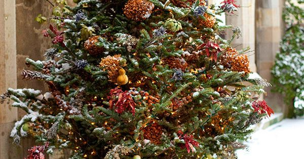 Potted Frasier Fir - Outdoor Holiday Decorating Ideas