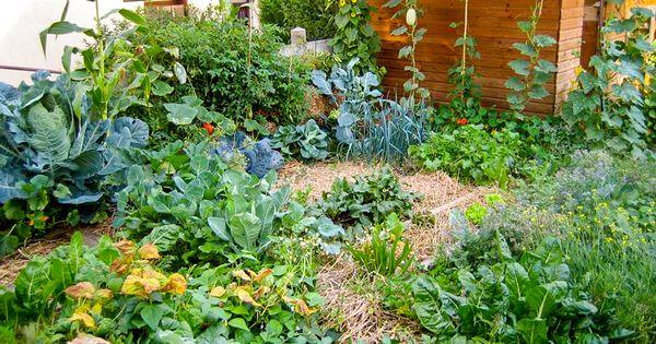 Le florissant jardin de joseph chauffrey est situ en for Jardin urbain permaculture