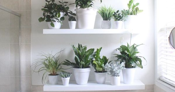 Plant Wall In The Bathroom Ikea Lack Shelves Lack Shelf