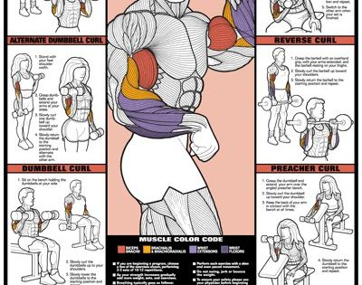 Bicep workout poster, for the guns