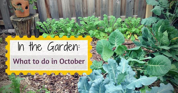 Whether You Planted A Fall Garden Or Are Putting Your
