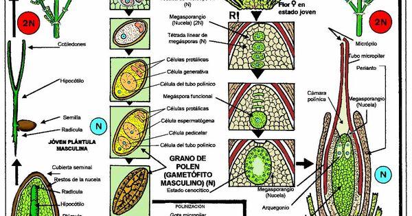 Homework help on microbilogy