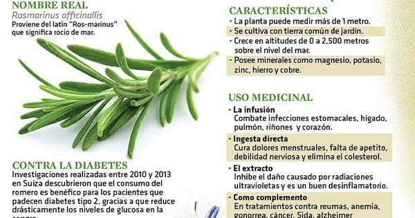 Romero milagroso herbolaria pinterest herbolaria for Planta decorativa con propiedades medicinales crucigrama