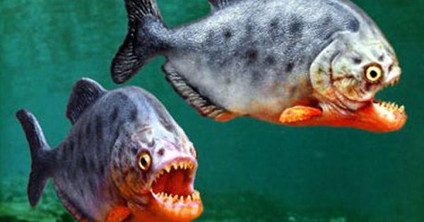 10 Interesting Amazon River Facts Rainforest Animals Amazon