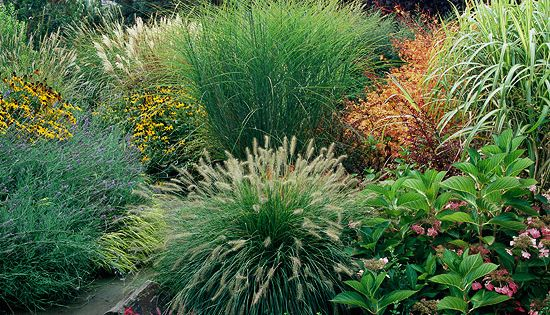 Texture-Beds and Borders Ornamental grasses add texture to the landscape. Soft, mounding