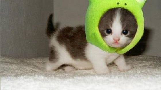 So cute!!! Kitten in a frog hat!